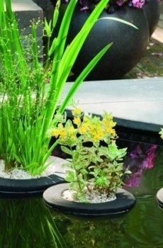 Krepšiai vandens augalams.